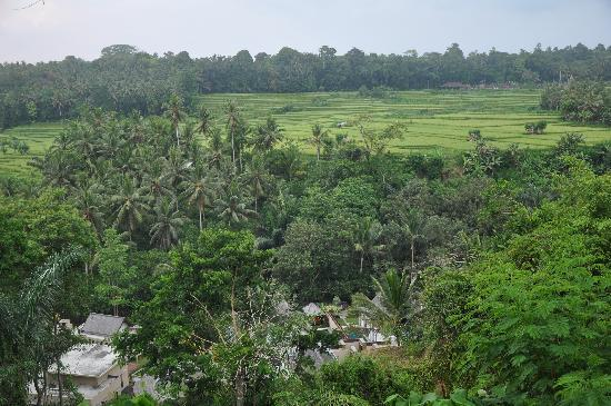 The Samaya Bali Ubud: Looking down toward the riverside villas and spa