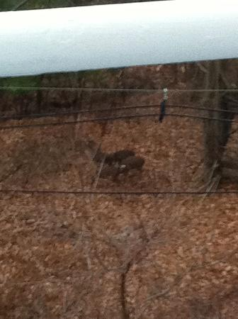 O'Briens Inn: 4 deer pic from Balcony!