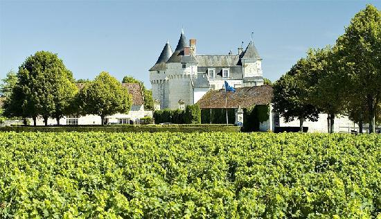 Chinon, France: Les vignes