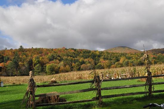 Stowe, VT : Cornfield and fall colors, Oct 2010