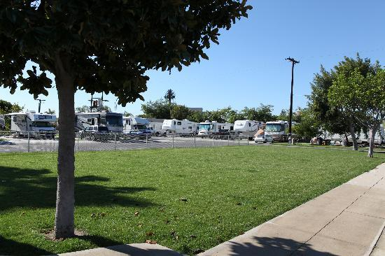 Anaheim Resort RV Park: Lots of grass and trees
