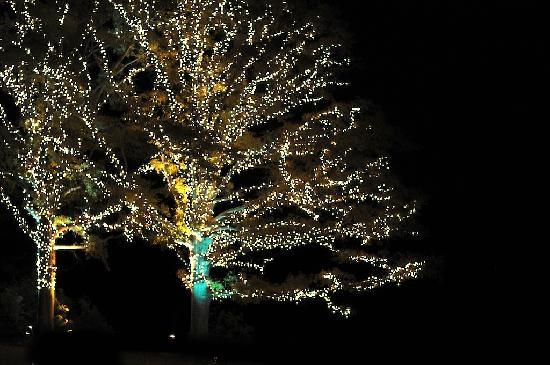 Callaway Gardens Resort: Riding through the Lights!