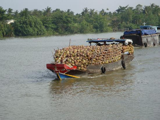 Mekong Delta, Vietnam: Coconuts travelling to the local markets