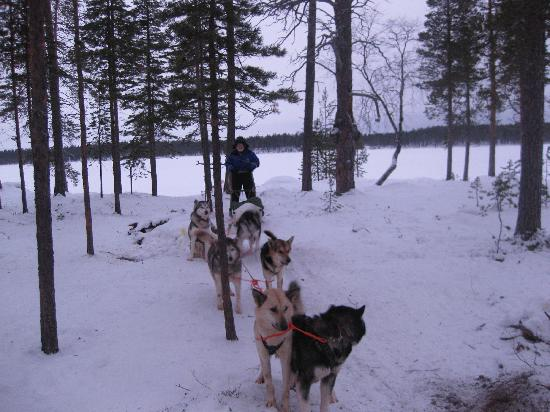 Nellim Wilderness Hotel: Huskies