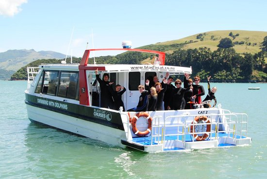 Swim with Dolphins Akaroa - Black Cat Cruises