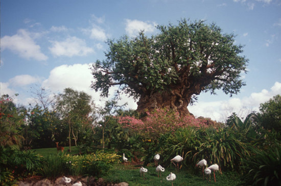 Disney World, FL: Disney's Animal Kingdom® Theme Park, ©Disney