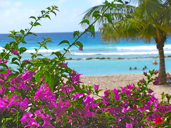 Barbados: coconut court --our winter home..