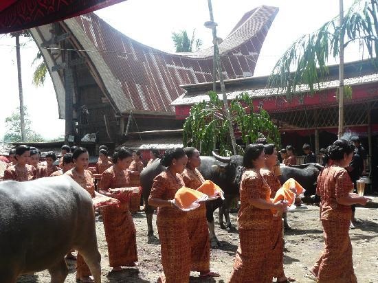 Rantepao, Indonesia: The procession of host walking to main house to serve drinks and snacks to the clan in main hous