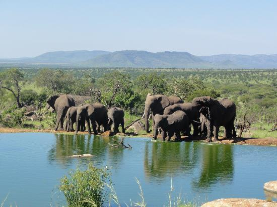 Bilila Lodge: elephants at watering hole