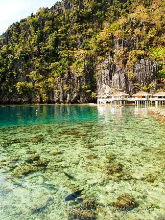 El Nido Resorts Miniloc Island: Snorkel with the jackfish in front of the resort