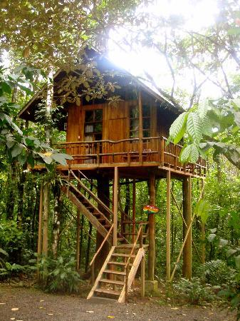 Treehouse picture of tree houses hotel costa rica la for Costa rica tree house rental