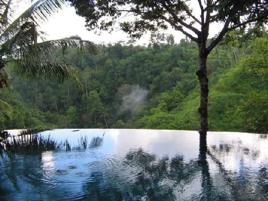 Payangan, Indonezja: pool in the forest