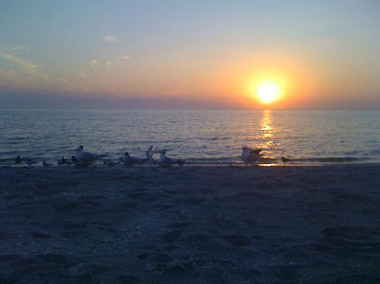 Tropical Winds Motel & Cottages: and birds in the sunsets,