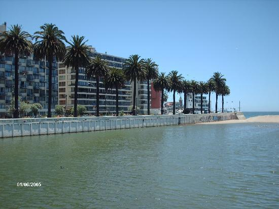 date palms along canal in vina del mar