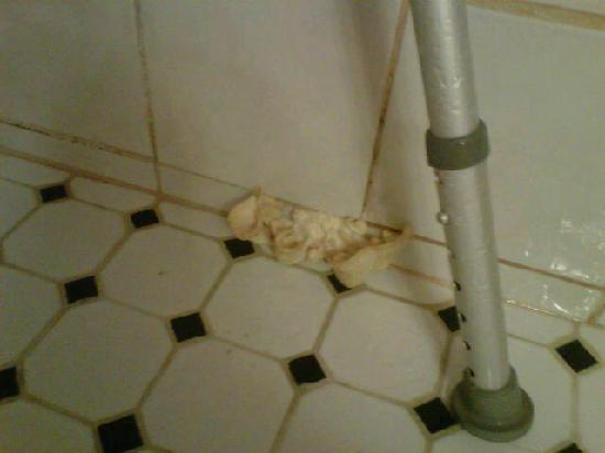 Quality Inn & Suites: FUNGUS IN THE SHOWER?!