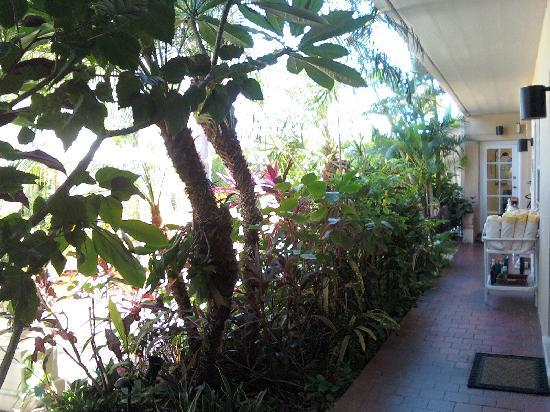 The Flamingo Inn Amongst the Flowers: Corridor &amp; garden area