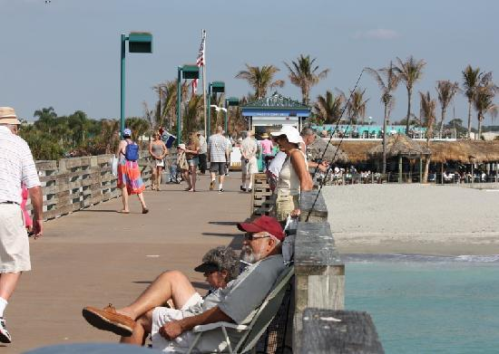 The venice florida fishing pier is a great place to enjoy for Venice fishing report
