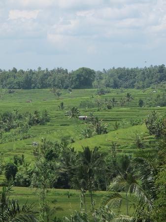 Tabanan, Indonesien: Vie of the Jatiluwih rice field