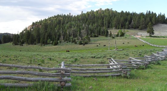 Brian Head, UT: Cow pasture at Yankee Meadows