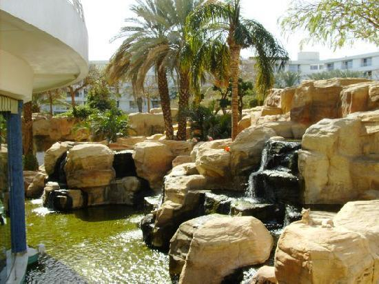 Club Hotel Eilat: goldfish pond