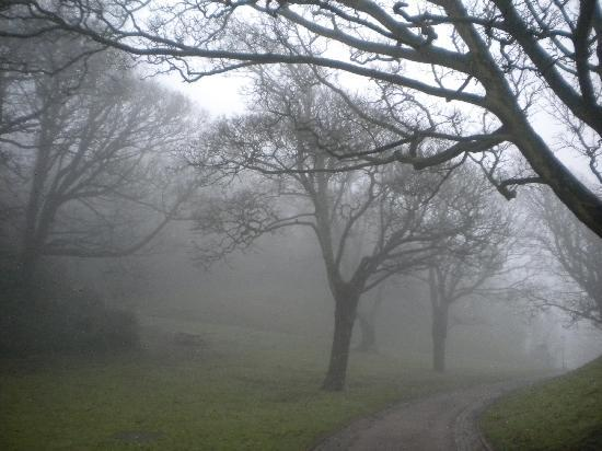 foggy day A foggy day chords by frank sinatra learn to play guitar by chord and tabs and use our crd diagrams, transpose the key and more.