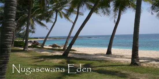 Photo of NugaSewana Eden Tangalla