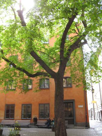 Photo of Castanea Old Town Hostel Stockholm