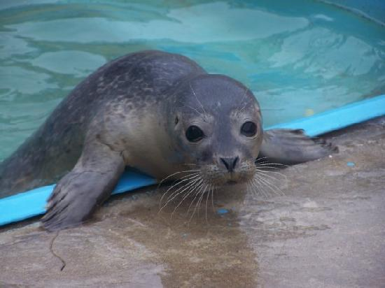 happy baby seal. - Picture of Natureland Seal Sanctuary, Skegness