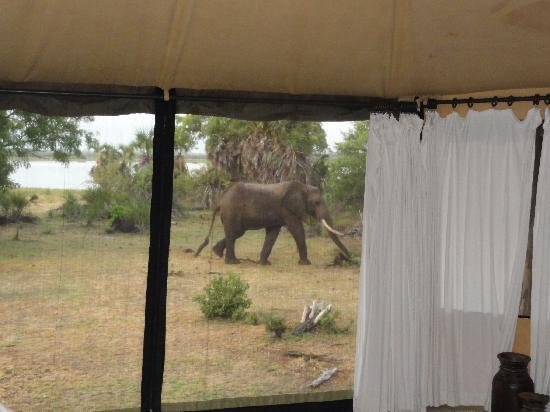 Selous Game Reserve, Tanzania: elephant as photographed from our bed