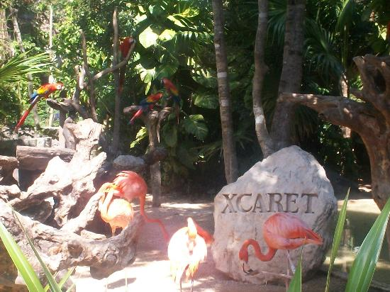 Photos of Xcaret Eco Theme Park, Playa del Carmen