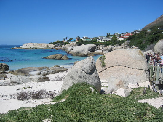 Simon's Town, South Africa: Pinguinkolonie