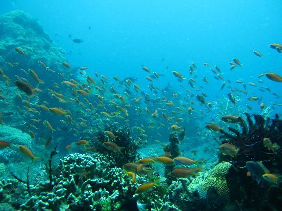 Amed, Indonesia: Japanesw wreck, coral garden