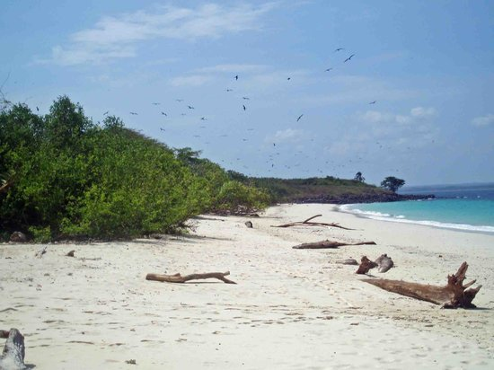 Pedasi, Panama: isla Iguana - spiaggia
