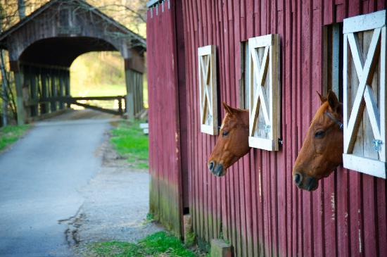 Blackberry Farm: the horse stables