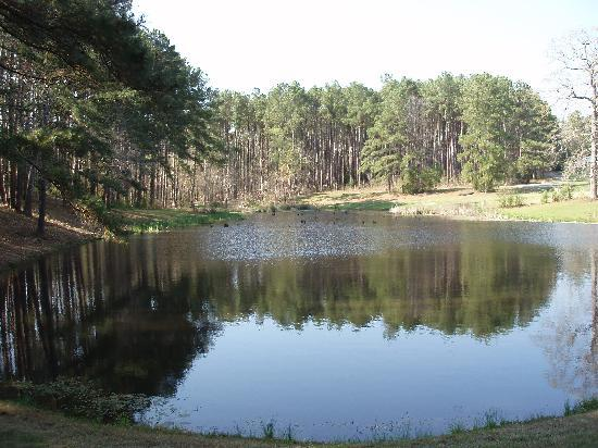 Pine Creek Country Inn: Fishing Pond at entrance