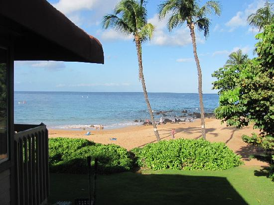 coral reef picture of days inn maui oceanfront kihei. Black Bedroom Furniture Sets. Home Design Ideas