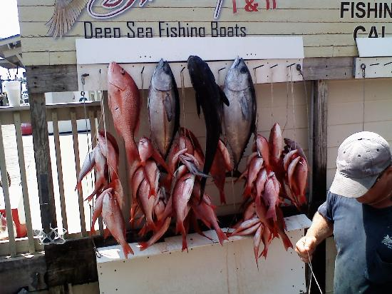 Expect a great day picture of swoop deep sea fishing for Swoop deep sea fishing