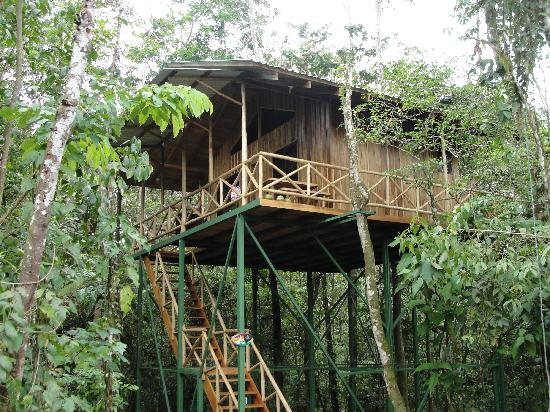 Tree house for Jungle house costa rica
