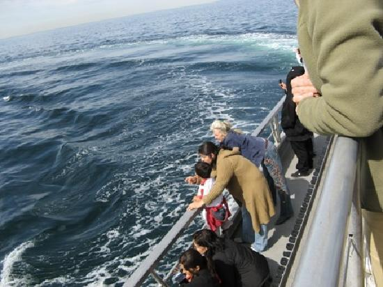 Sea life whale watching and fishing are popular in marina for Marina del rey fishing report