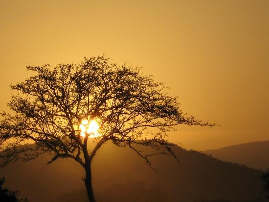 Mambrui, Kenia: tramonto in safari