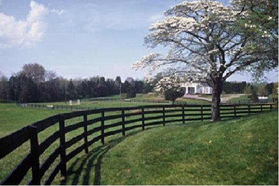 Black Horse Inn: Dogwood in bloom, reception venue in background