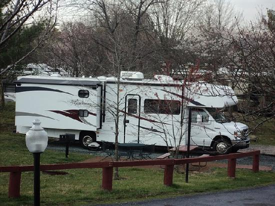 Cherry Hill Park Campground: Camp Sites