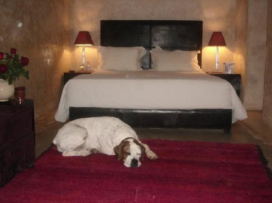 Riad Dar One: The lovely Tosca invited into our room for a visit
