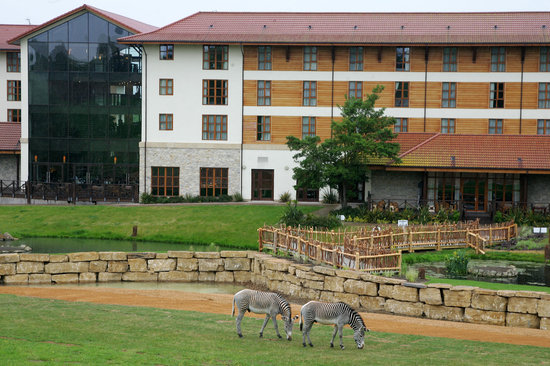Holiday Inn London - Chessington: Hotel overlooking Wanyama Reserve