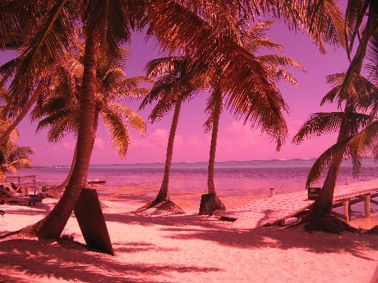 Xanadu Island Resort Belize: Everything is rosy
