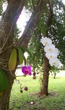 Orchids Growing On The Trees Picture Of Parrot Cay By