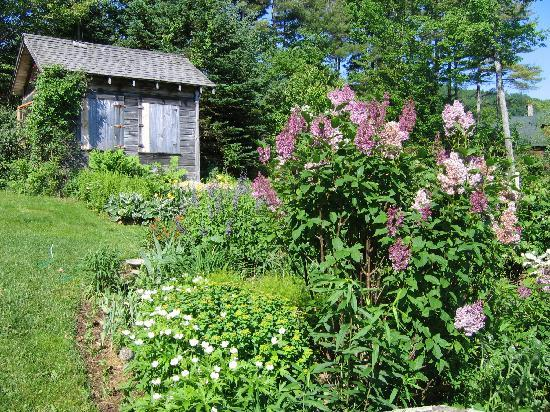 Bridgewater, NH: Side garden in lilac time