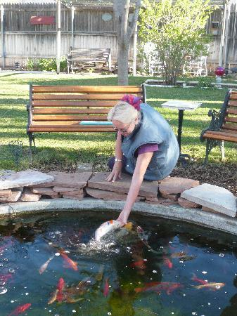 Parkview House Bed and Breakfast: Ask to see the garden and fish feeding!