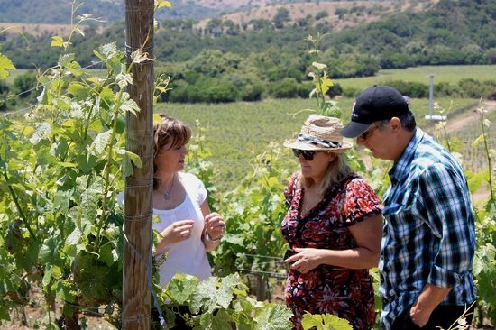 Uncorked Wine Tours