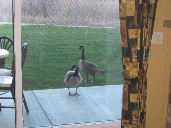 1862 David Walley's Hot Springs Resort and Spa: Hungry Geese